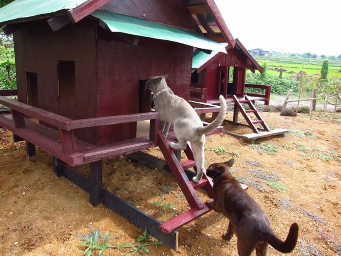 Развлечения для кошек в монастыре в Инле. | Фото: flickr.com.