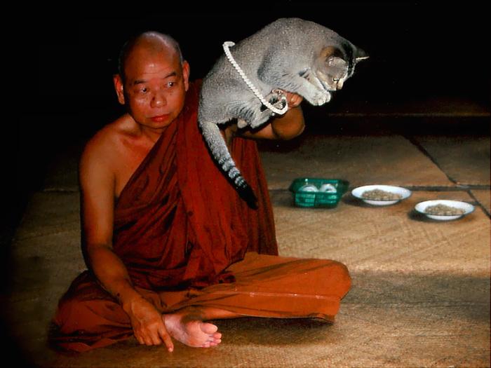 Буддистский монах в Монастыре прыгающих кошек. | Фото: inledaytours.com.