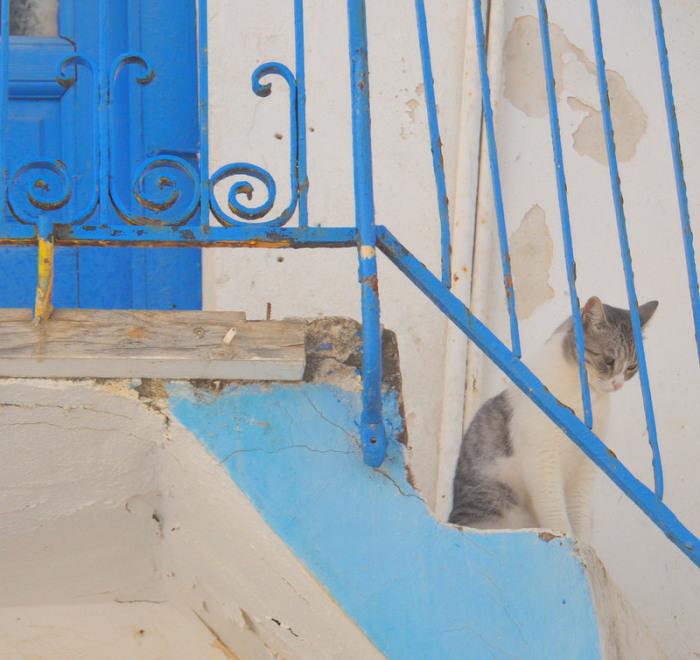 Кошка в старой части Хора. | Фото: flickr.com.