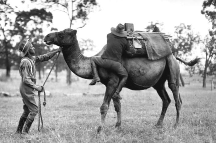Учения кавалеристов австралийского верблюжьего корпуса. | Фото: commons.wikimedia.org.