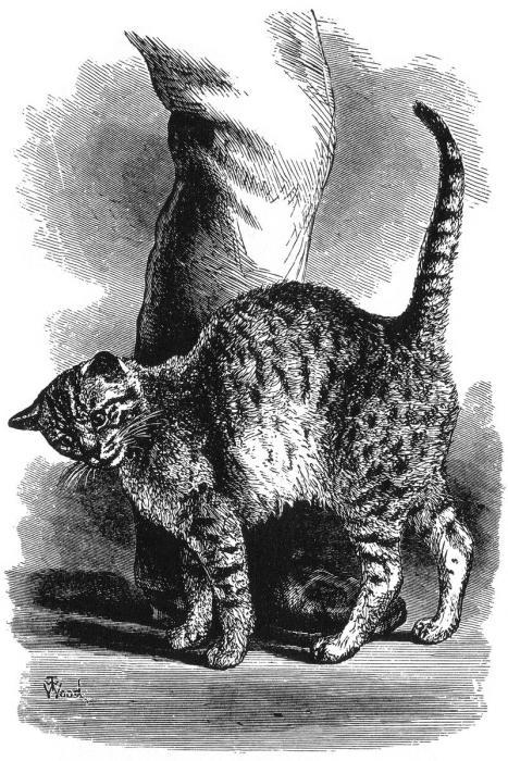 Рисунок из книги Чарльза Дарвина «Выражение эмоций у человека и животных». | Фото: en.wikipedia.org.
