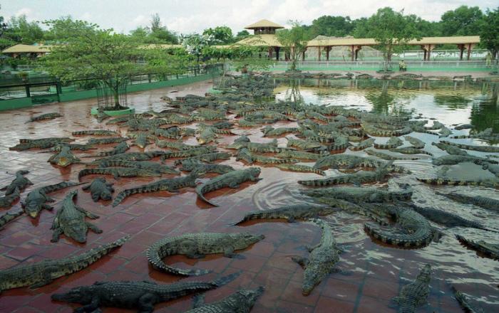 Более 1500 рептилий живет на крокодиловой ферме.