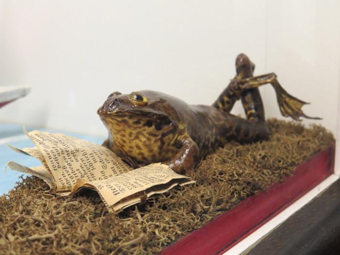 Лягушка на отдыхе. | Фото: total-croatia-news.com.
