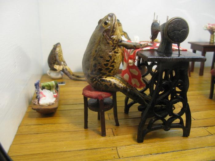 Лягушка занята созданием платья. | Фото: atlasobscura.com.
