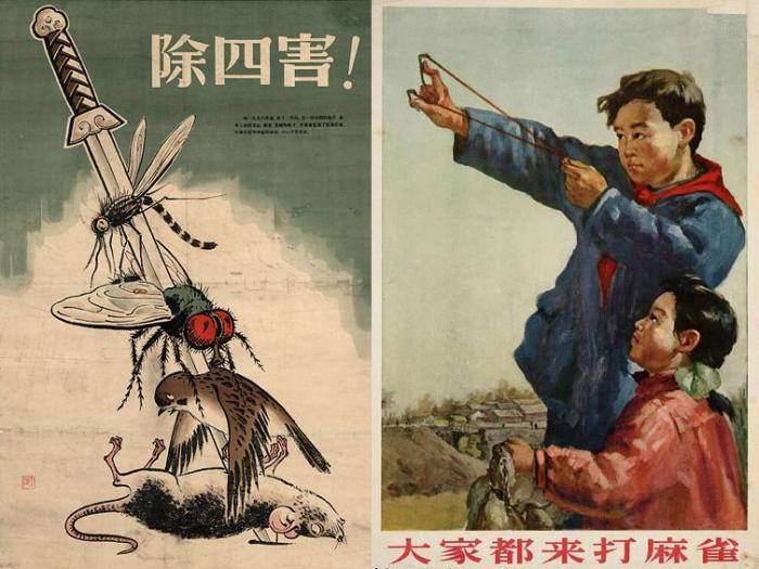 Китайские плакаты, призывающие уничтожать «четырех вредителей». | Фото: beekoz.fr.