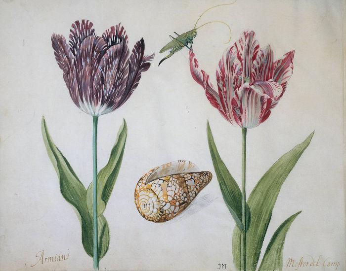 Два тюльпана, раковина и насекомое. | Фото: atlasobscura.com.