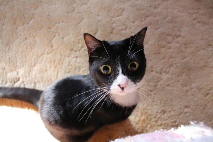 Кошачьи психологи считают, что медленное моргание кошки говорит об отсутствии враждебности. | Фото: atlasobscura.com.