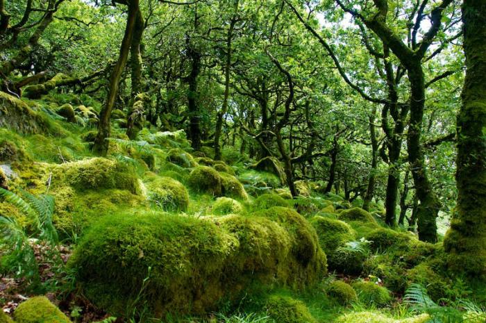 Поросшие мхом камни и покрученные деревья - атрибуты приключенческой сказки.