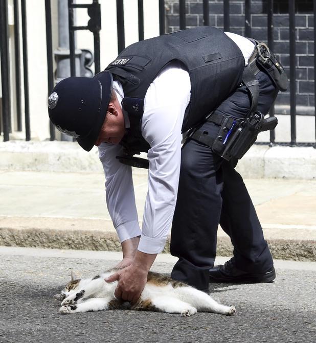 Ларри в объятиях полицейского. | Фото: motiongroove.com.