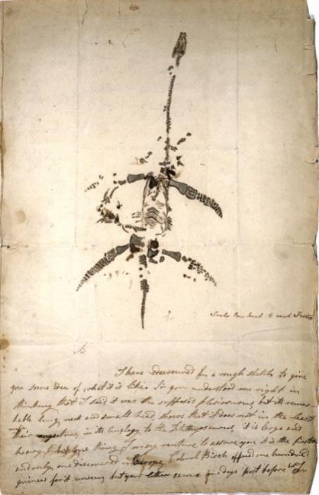 Письмо и рисунок Мэри Эннинг 1823 года объявляет об открытии ископаемого животного, теперь известного как плезиозавр. | Фото: atlasobscura.com.