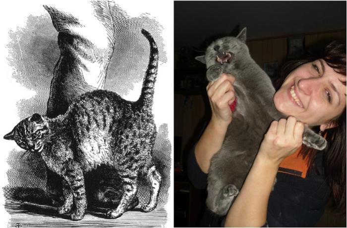 Выражение эмоций и общение у кошек.