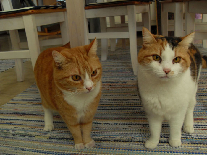 Общение между кошками налажено на языке тела и запахов. | Фото: atlasobscura.com.