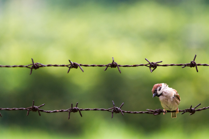 Воробей, которого еще не уничтожили. | Фото: flickr.com.
