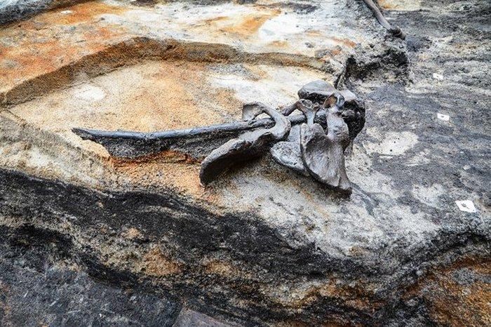 Четыре тазовые кости, найденные в Алкен Энге. | Фото: cas.au.dk.