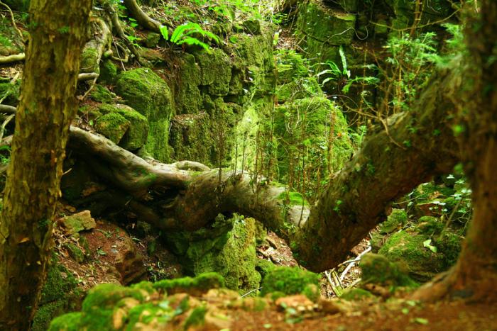 Непроходимые дебри легендарного леса из толкиеновской саги.
