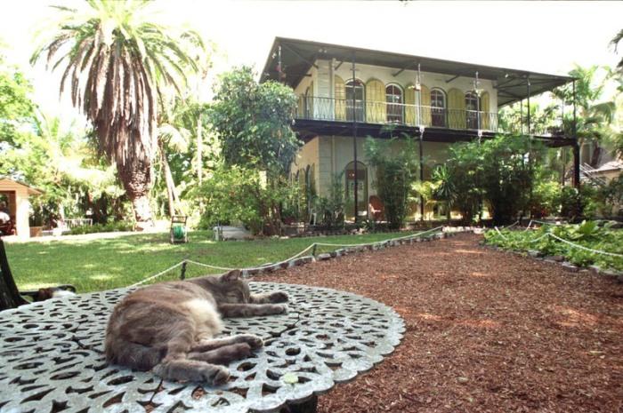 Кошка в доме Хемингуэя. | Фото: flickr.com.