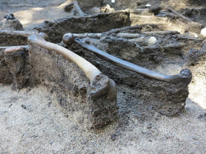 Кости, найденный в торфяном болоте у Алкен Энге. | Фото: alkenenge.dk.
