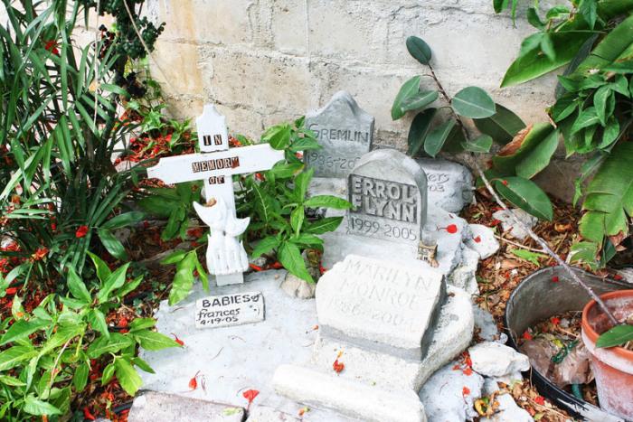 Кошачье кладбище в доме-музее Эрнеста Хемингуэя. | Фото: flickr.com.