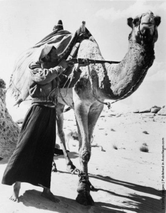 Стрелок-бедуин ищет цель, прячась за своим верблюдом в Сахаре. | Фото: avaxnews.com.
