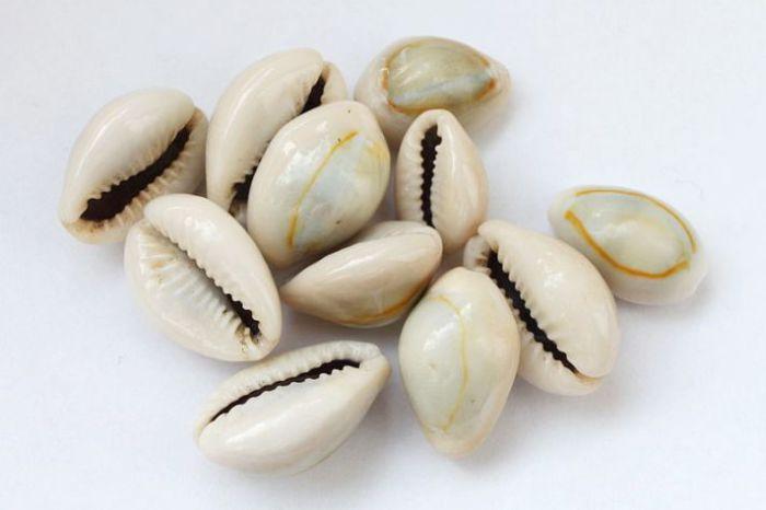 Ракушки моллюсков каури (или ципреи). | Фото: oargyso.606h.net.