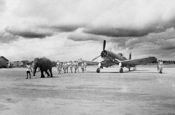 Слон перемещает истребитель Corsair на новую позицию на аэродроме в Индии, 1944 год. | Фото: iwm.org.uk.
