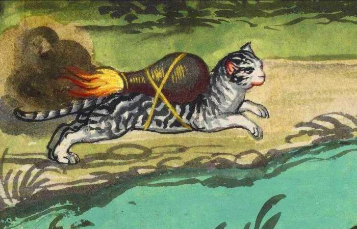 Как из обычного котика сделать грозное оружие. | Фото: luna.folger.edu.