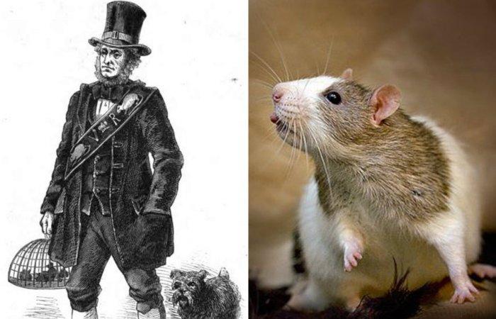 Джек Блэк - главный крысолов королевы Виктории. | Фото: 8Lap.ru и en.wikipedia.org.