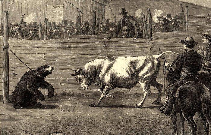 Бой быка и медведя. Калифорния, 1876 год. | Фото: atlasobscura.com.