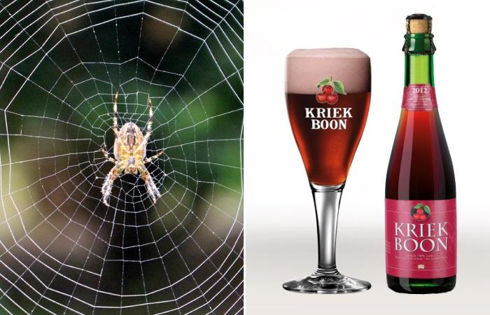 Мало кто знает, что по-настоящему объединяет хорошее пиво и пауков.