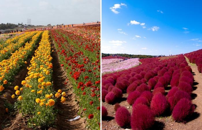 Завораживающие пейзажи цветущей весны.