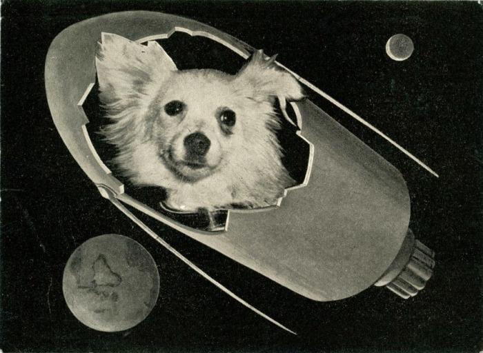 Космическая собака Козявка на итальянской открытке 1960 года.