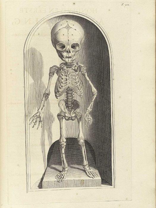 Скелет младенца в книге Anatomia humani corpois Говерта Бидлоо, 1690 год. | Фото: upload.wikimedia.org.