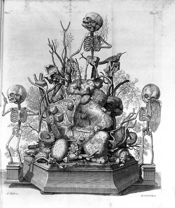 Гравюра из книги Opera omnia anatomico-medic Фредерика Рюйша. | Фото: upload.wikimedia.org.