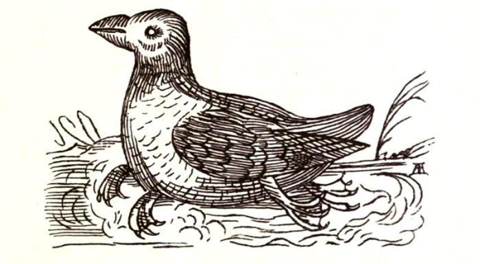 Очень необычная птица. Гравюра XVII века. | Фото: biodiversitylibrary.org.