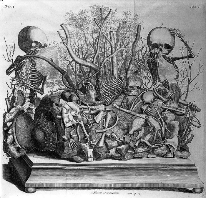 Гравюра из книги Opera omnia anatomico-medic Фредерика Рюйша, 1727 год. | Фото: wellcomeimages.org.
