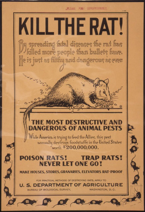 Плакат министерства сельского хозяйства США с призывом уничтожать крыс. 1910-е годы. | Фото: it.wikipedia.org.