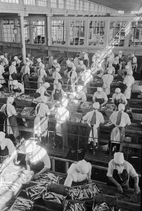 Завод по переработке сайры на острове Шикотан, 1969 год.   Фото: commons.wikimedia.org.