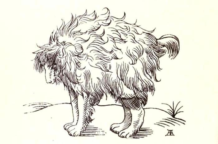 Сложно сказать, какое животное могло стать прототипом для собаки-подражателя. Гравюра XVII века. | Фото: biodiversitylibrary.org.