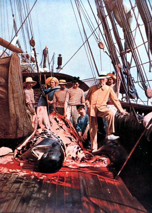Альбер I на палубе исследовательского судна «Княгиня Алиса». | Фото: fr.wikipedia.org.