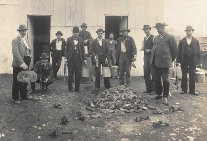 Профессиональные крысоловы в Сиднее, Австралия в 1900 году. | Фото: commons.wikimedia.org.