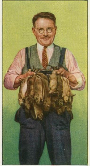 Уильям Дальтон, британский крысолов. | Фото: pinterest.com.