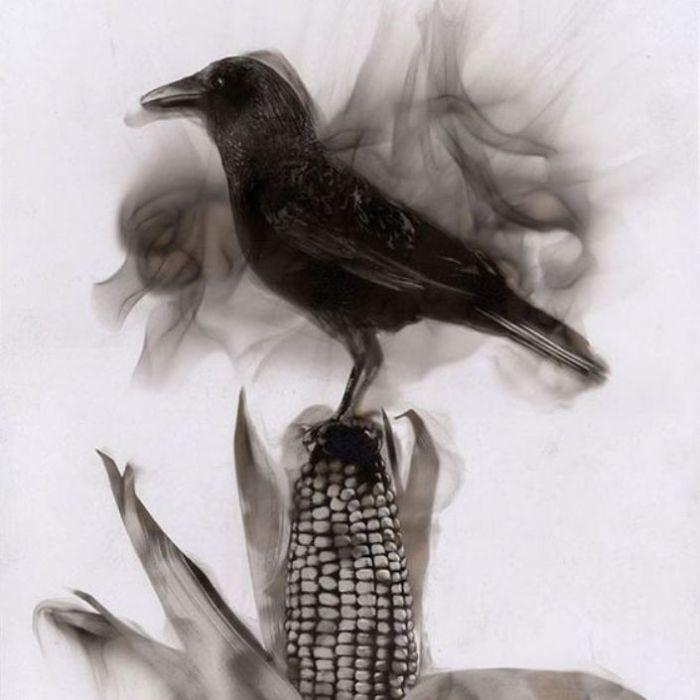 Птица на початке кукурузы. Стивен Спазук. | Фото: dose.com.