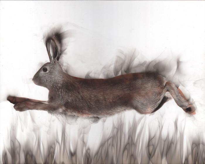Бегущий заяц. Стивен Спазук, 2017 год. | Фото: spazuk.com.