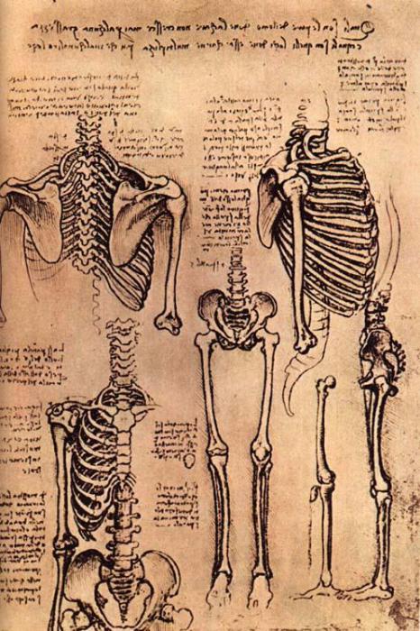 Рисунок скелета, сделанный Леонардо да Винчи. | Фото: ru.wikipedia.org.