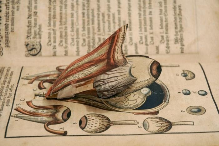 «Многослойная» иллюстрация из книги по офтальмологии, 1583 год. | Фото: blogs.library.duke.edu.