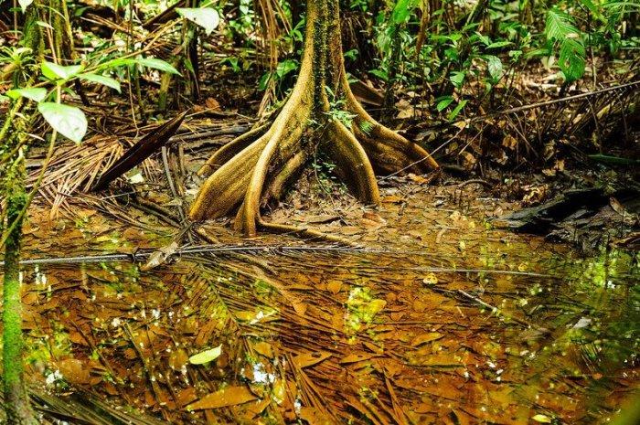 Тропический лес, который окружал каторгу во Французской Гвиане. | Фото: atlasobscura.com.