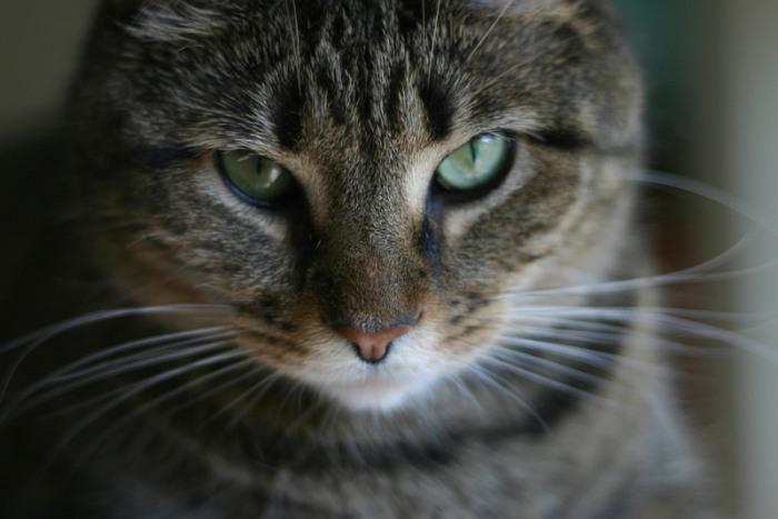 Мы никогда не узнаем, что кошки думают обо всем этом. | Фото: flickr.com.
