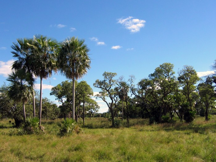Ландшафт региона Чако.   Фото: ru.wikipedia.org.