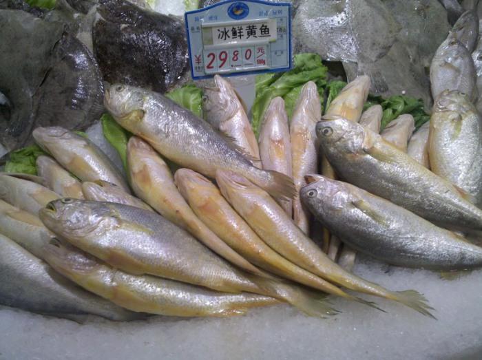 Рыба, которую используют, чтобы бить корейского жениха перед его первой брачной ночью. | Фото: en.wikipedia.org.