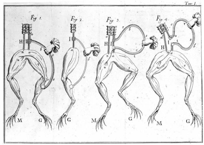 Все началось с маленького эксперимента с лягушкой, который сегодня проводят студенты, изучающие анатомию.   Фото: wellcomeimages.org.